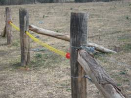figure 1 permanent electric fencing set up for rotational grazing