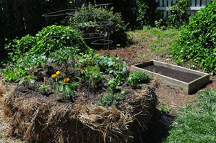 Making garden beds out of old hay