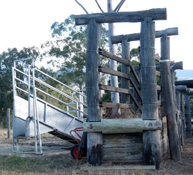 Cattle Infrastructure For Small Farms Farmstyle Australia